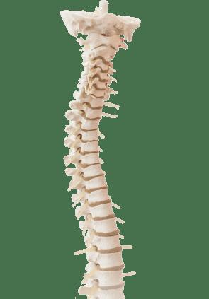 Adel Pediatric Chiropractic Spine